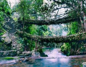 78453-Root-bridges-in-Shillong.jpg