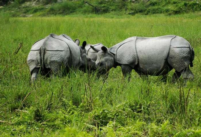 77362-jaldapara-wildlife-rhino3.jpg